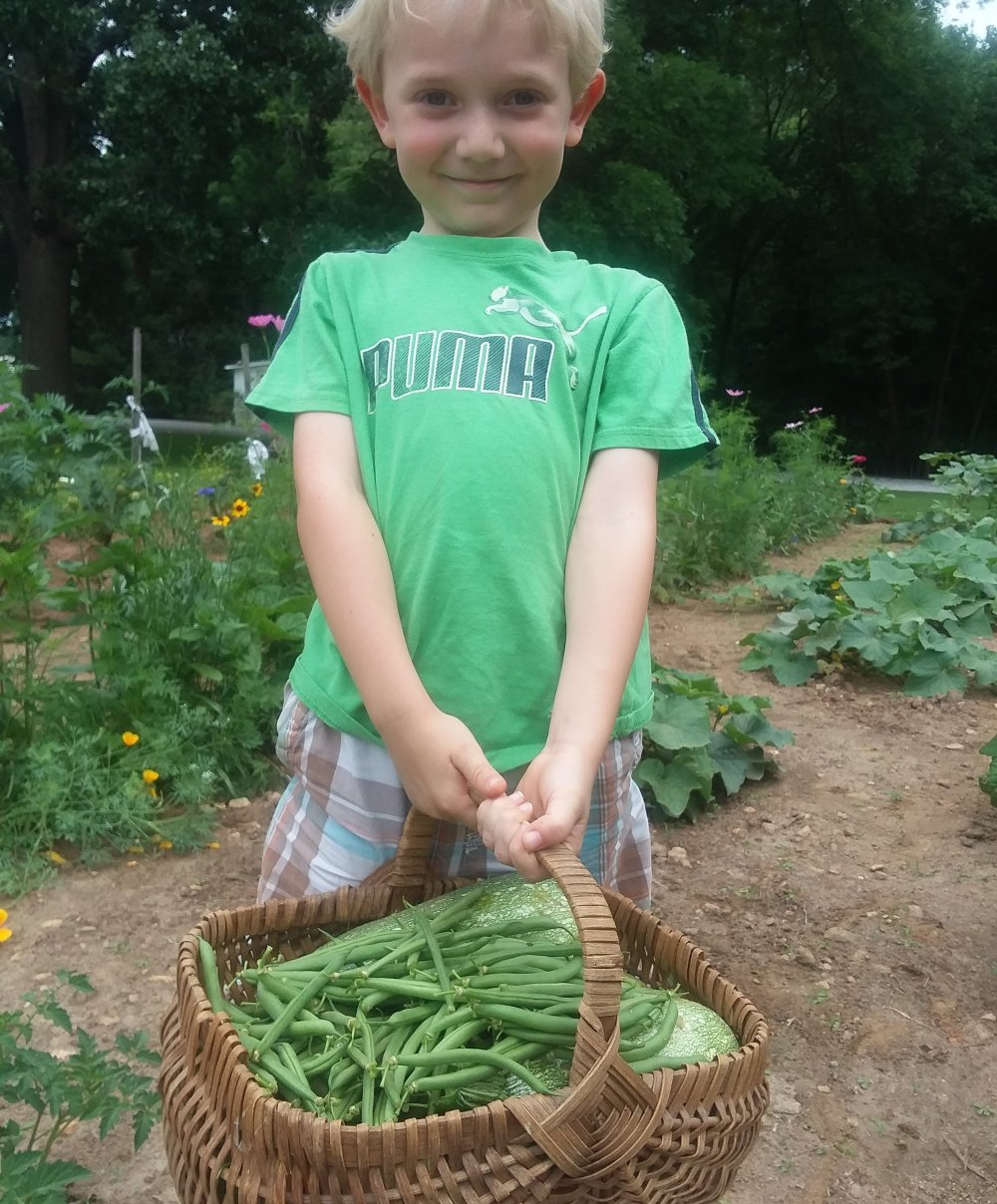 little boy in garden holding basket of green beans